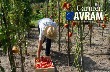 Situația critică a lucrătorilor agricoli sezonieri din UE