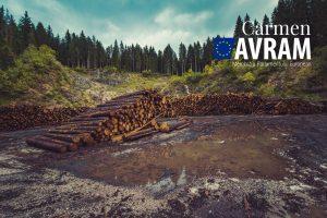 """Carmen Avram cere explicații Ministrului Mediului: """"Care este planul de măsuri pentru stoparea tăierilor ilegale?"""""""