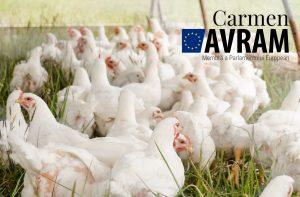 O nouă speranță pentru micii producători de pui și iepuri