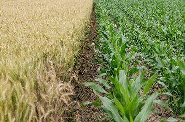 """Conceptul ecologic """"De la fermă la furculiță"""" și costurile lui (Jurnalul.ro)"""